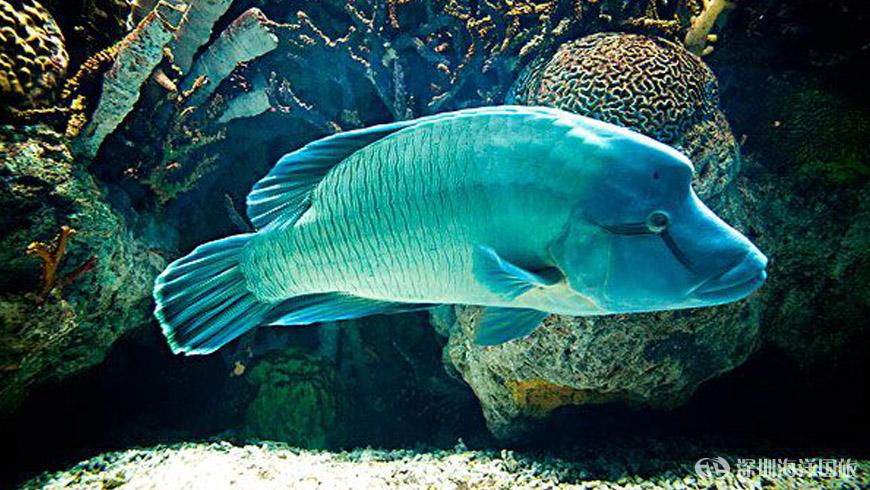 圣安妮国家海洋公园